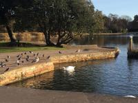 Poole Pond